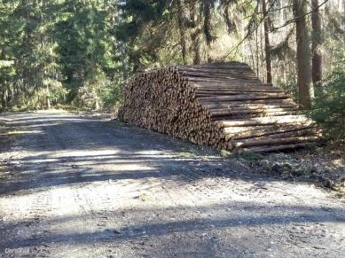 der würzig-aromatische Duft von frisch geschlagenem Holz!
