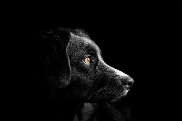 dog-4118585_1280
